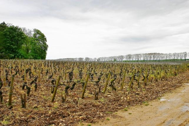 Burgundia Beaune raz jeszcze