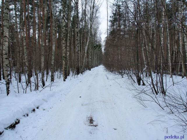 Wille Konstancina cz.2 leśna droga