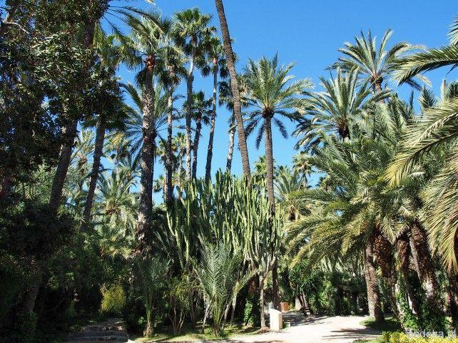 Palmy w Elche