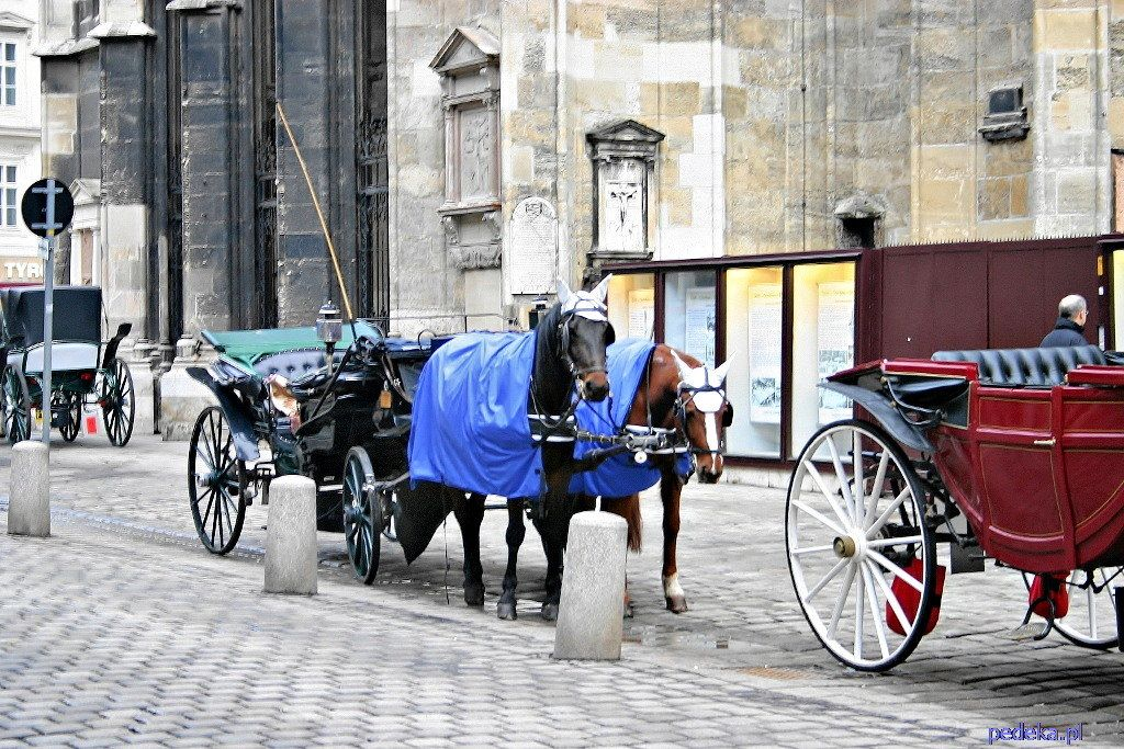 zwiedzamy miasta Wiedeń