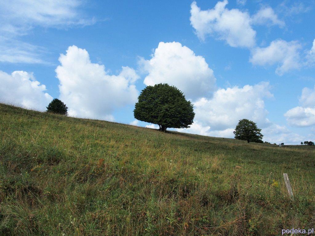 Piękna przyroda. Suwalszczyzna drzewa