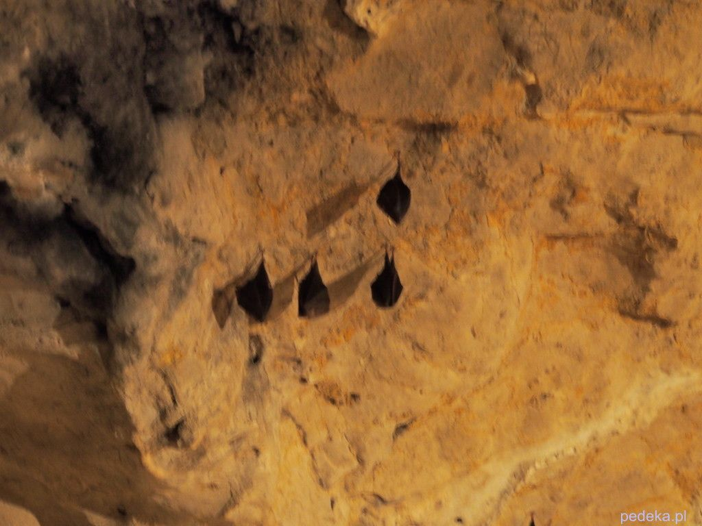 zwiedzanie Jaskini Wierzchowskiej