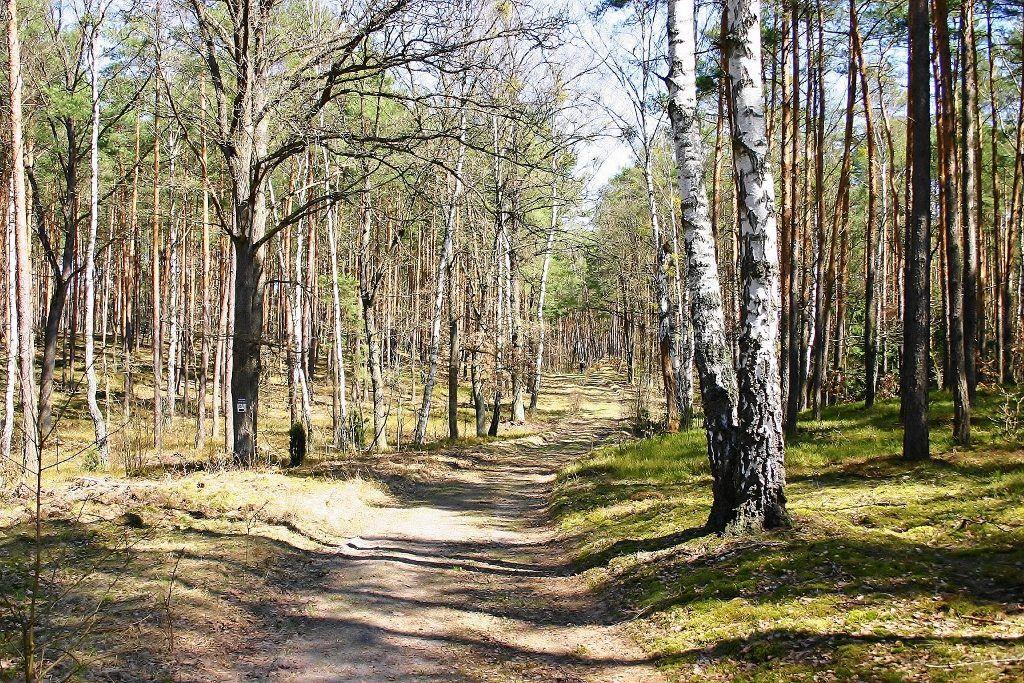 Najatrakcyjniejsze miejsca na Mazowszu Puszcza Kampinoska