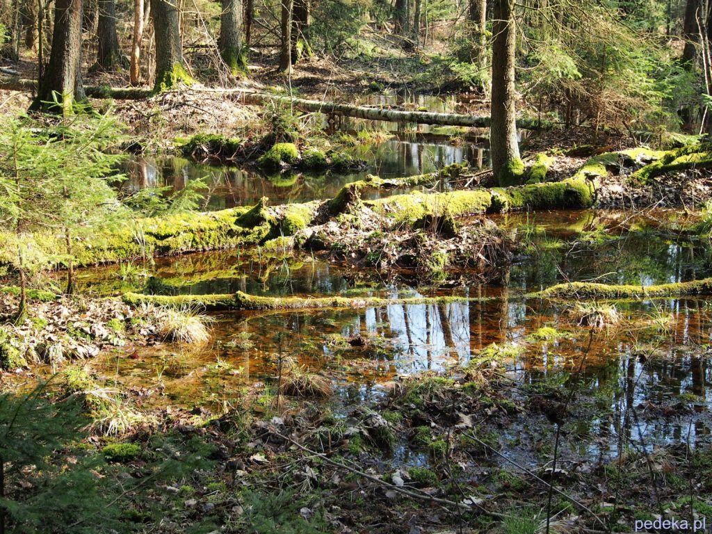 Wiosna w Biebrzańskim Parku Narodowym