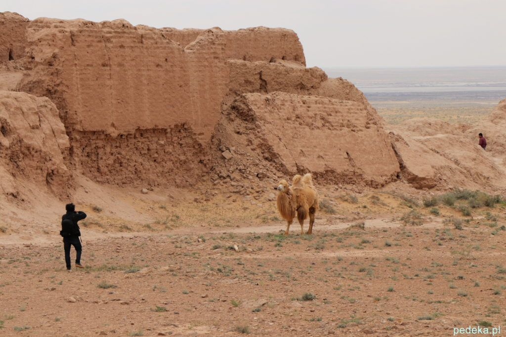 Wielbłąd w twierdzy