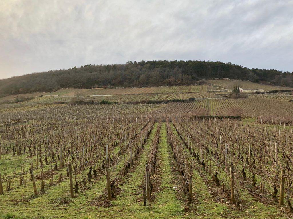 Burgundzkie wino. Winnica w lutym