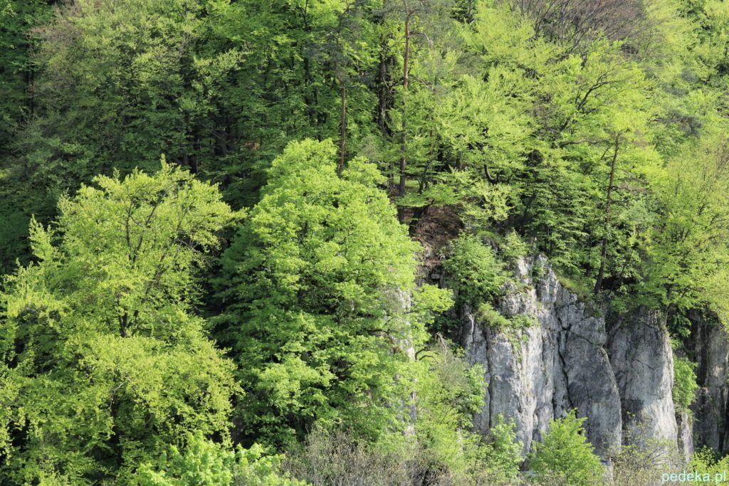 Skały w Ojcowskim Parku Narodowym