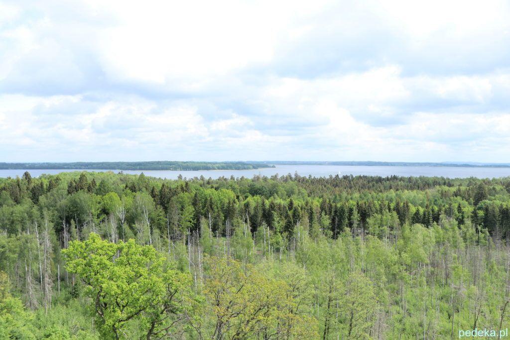 Widok z wieży, za wierzchołkami drzew widoczne jest jezioro