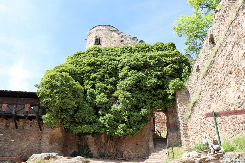 Zamek Chojnik. Schody i wieża tonąca w zieleni