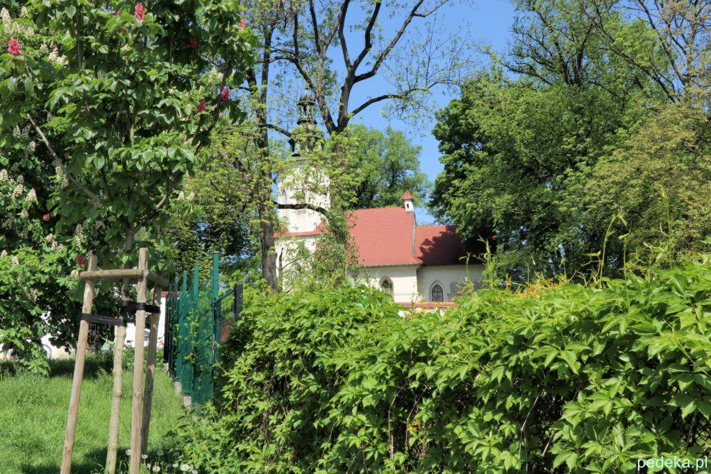 Za drzewami kościół św. Salwatora