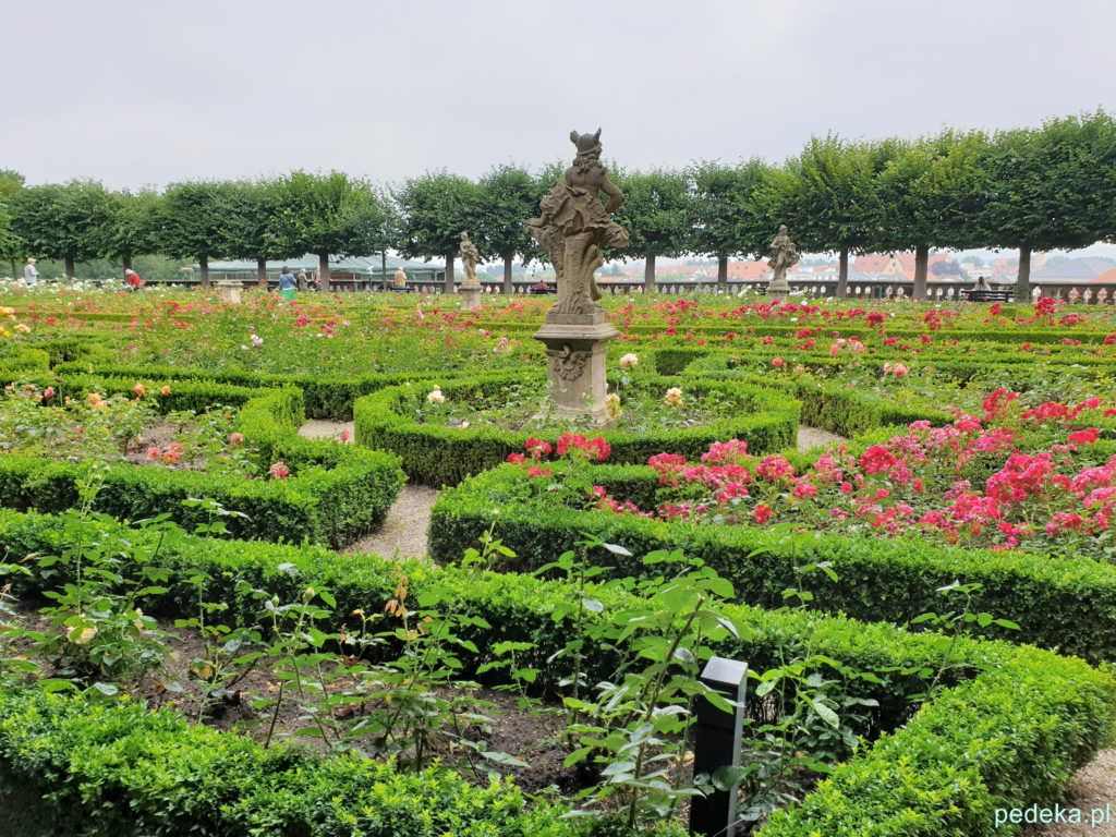 Bamberg. Ogród różany