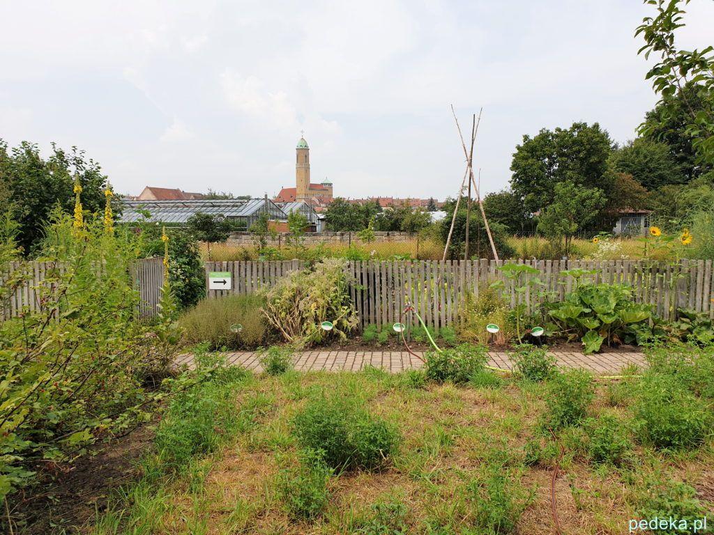 Ogród w muzeum ogrodnictwa