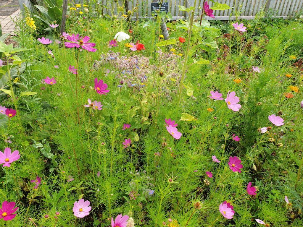 Kwiatki w ogródku muzealnym