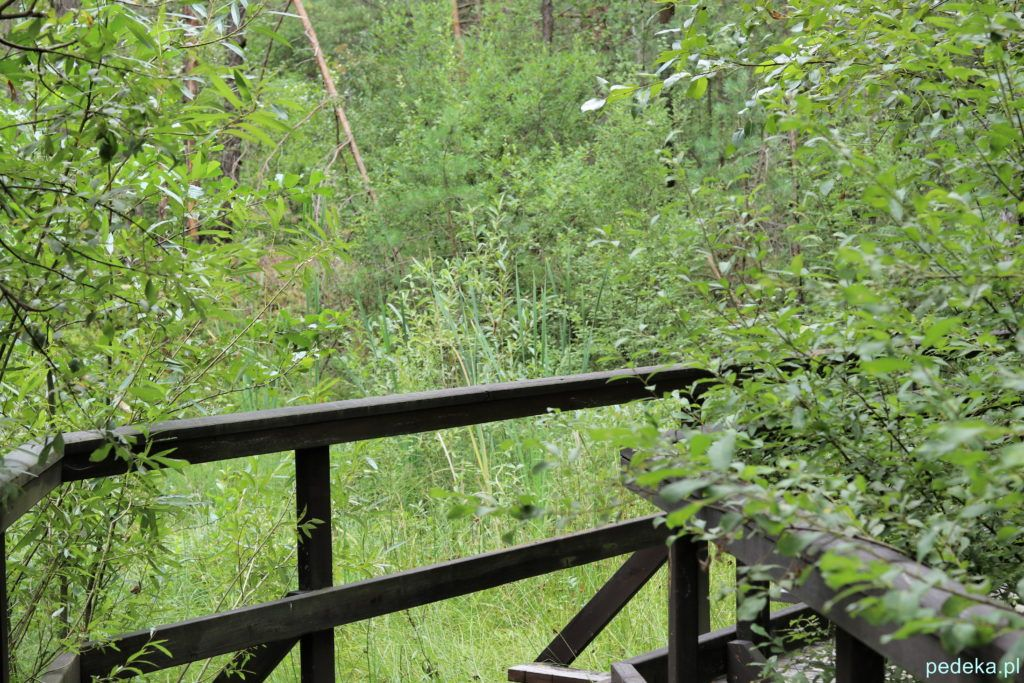 Droga do rezerwatu Gagaty Sołtykowskie, drewniany mostek