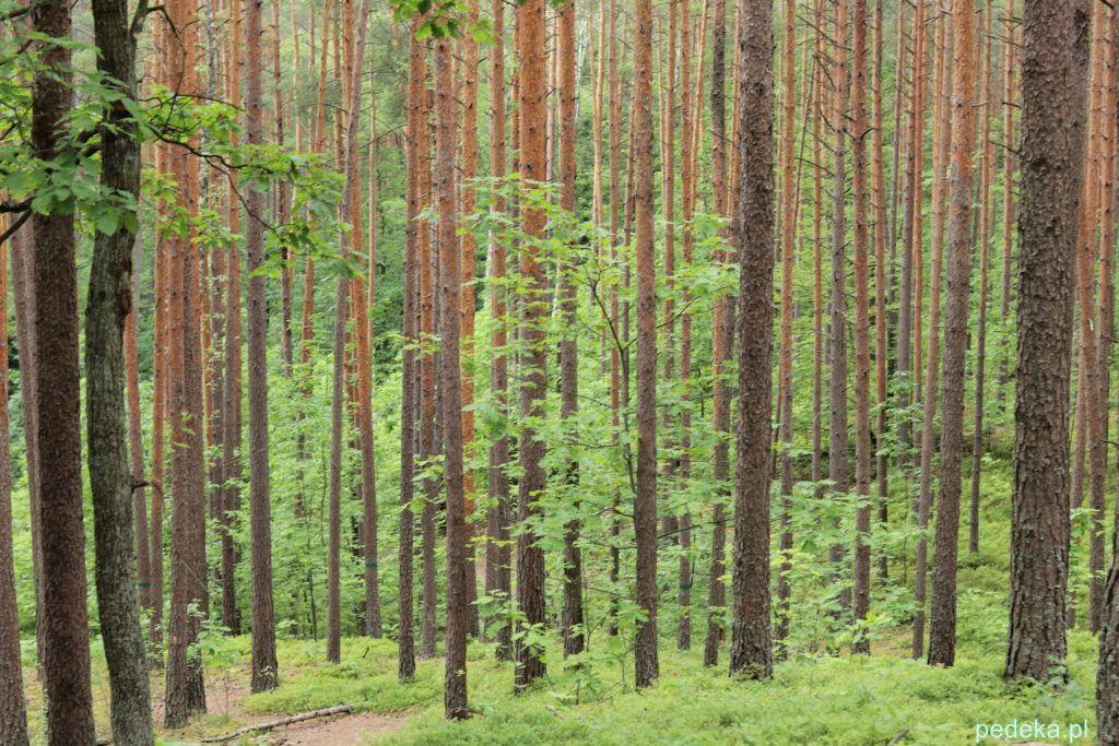 Las w rezerwacie przyrody
