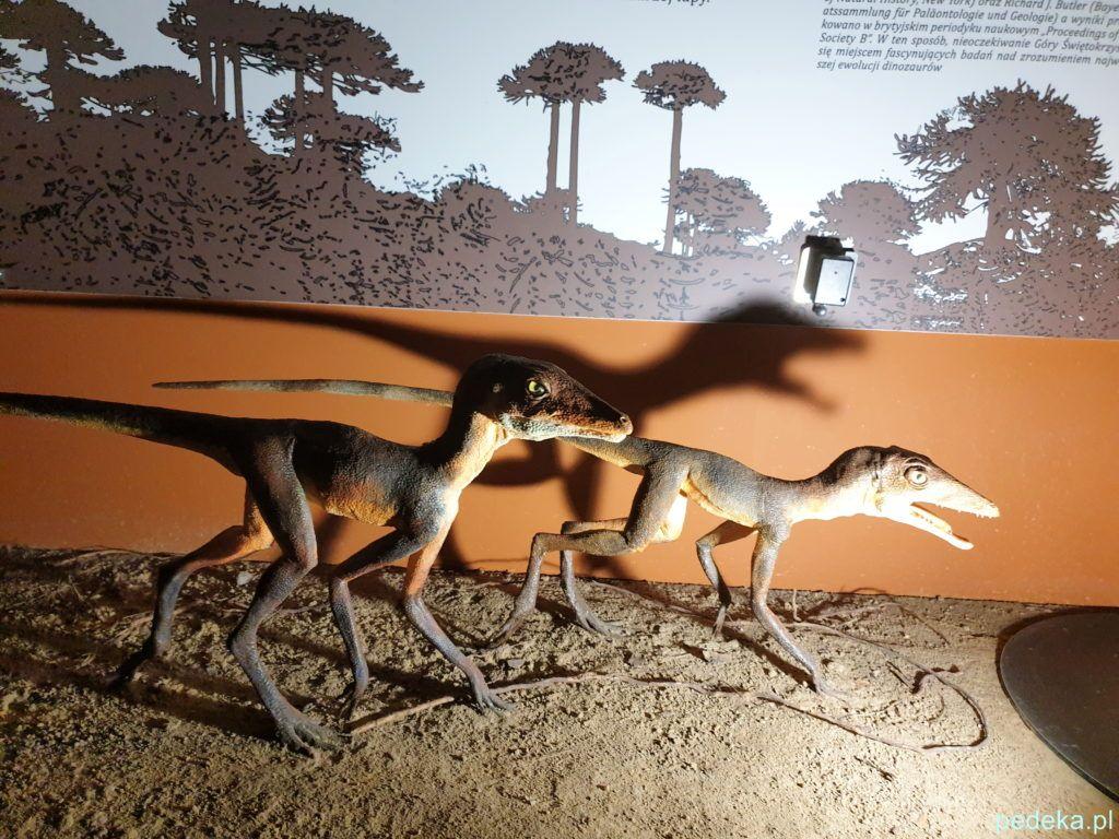 Muzeum w Starachowicach. Maluchy od których wywodzą się dinozaury