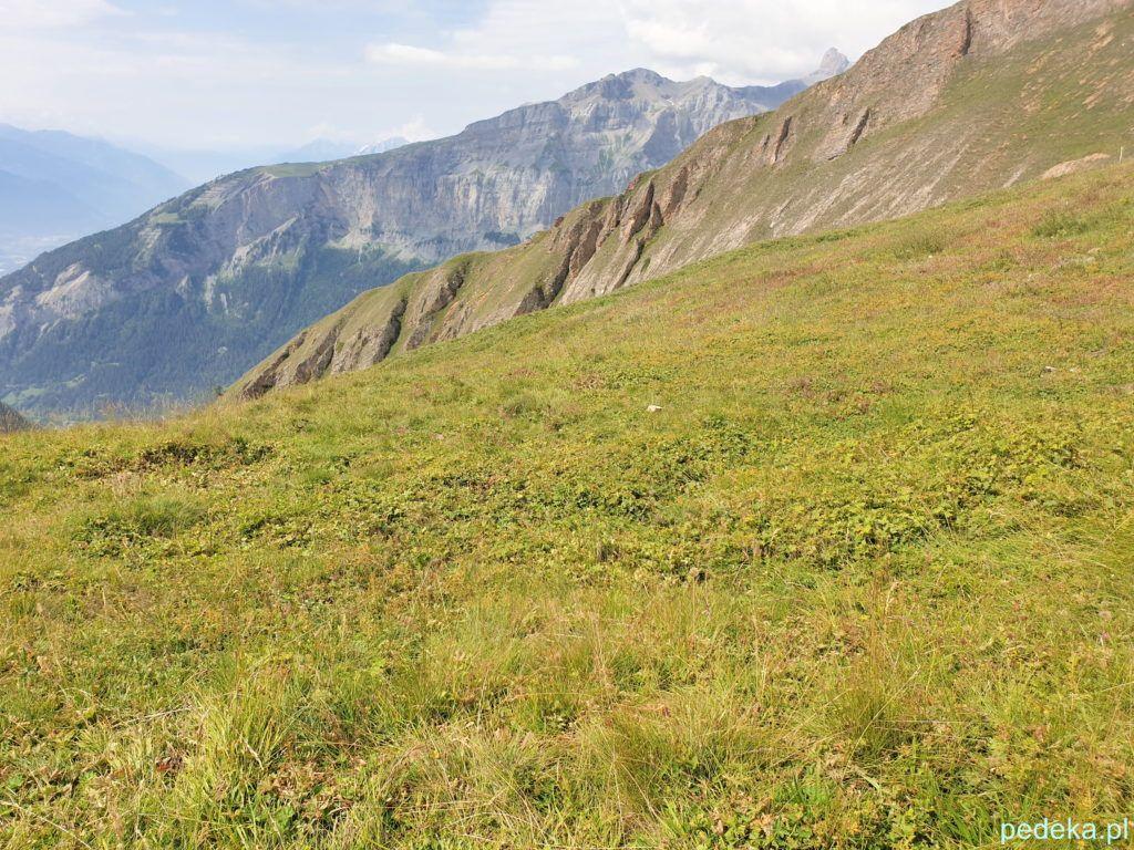 Piękna przyroda. Leukerbad. Wielka łąka z górami w tle