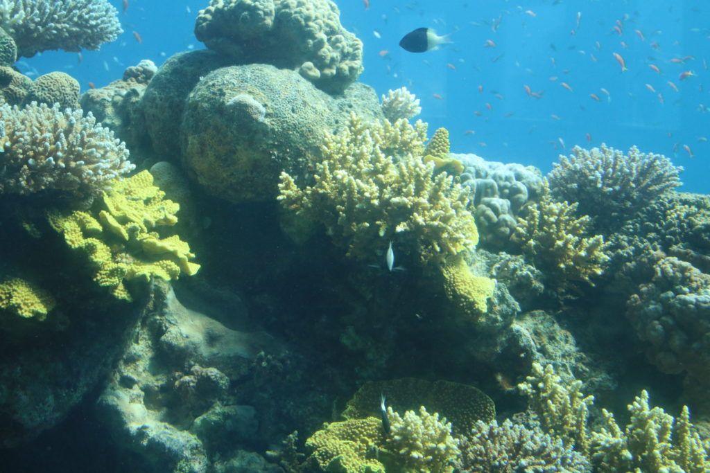 Eljat podwodny świat