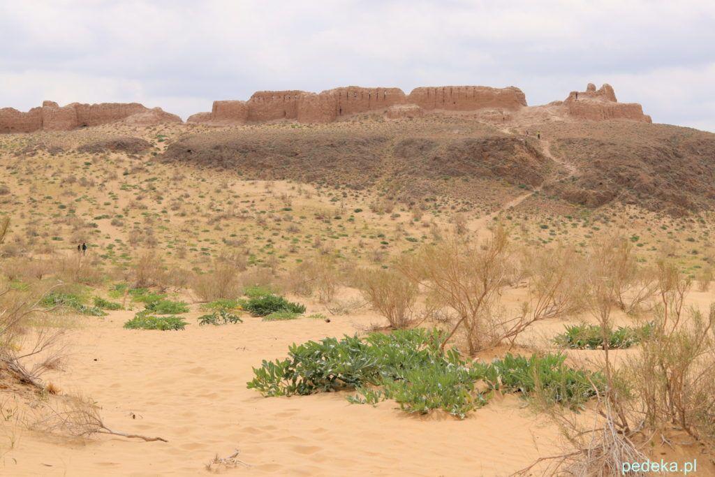 Uzbekistan nasza wycieczka. Dawna twierdza na pustyni Kyzył-kum