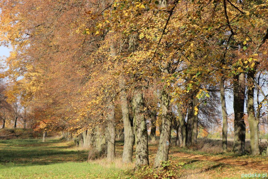 Jesień w parku w Chroszczy