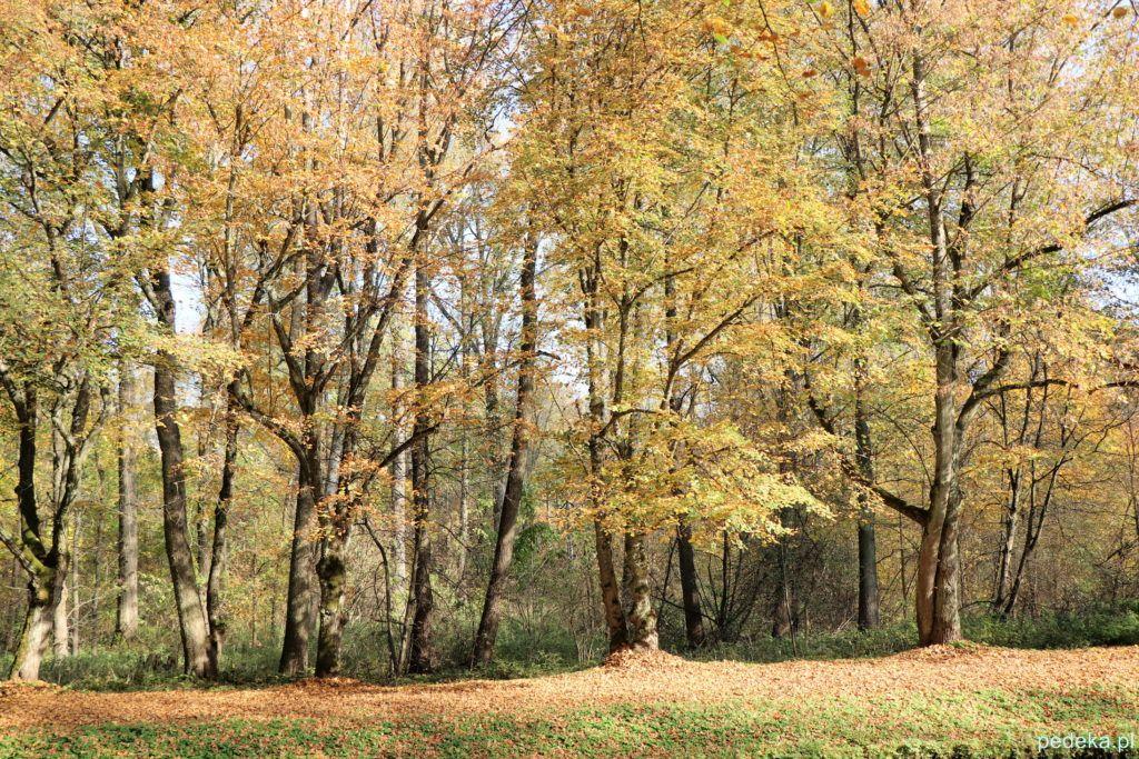Jeszcze trochę drzew w parku
