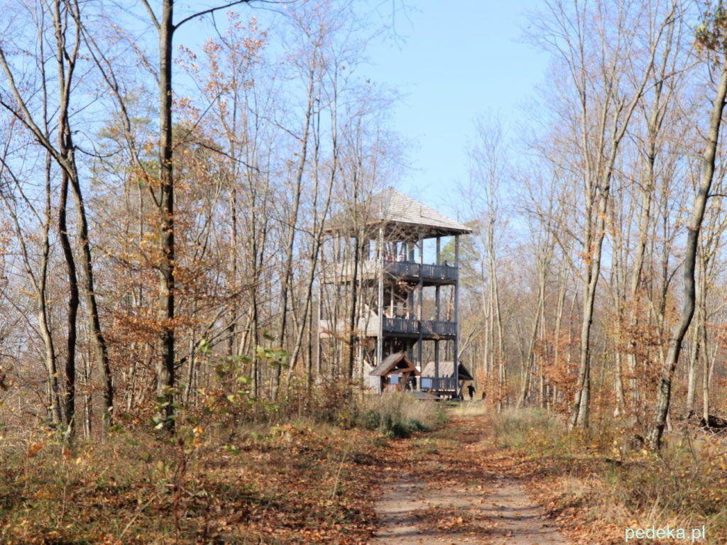 Puszcza Knyszyńska. Wieża widokowa na Kopnej Górze