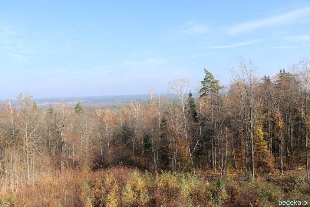 Puszcza Knyszyńska. Widok z wieży