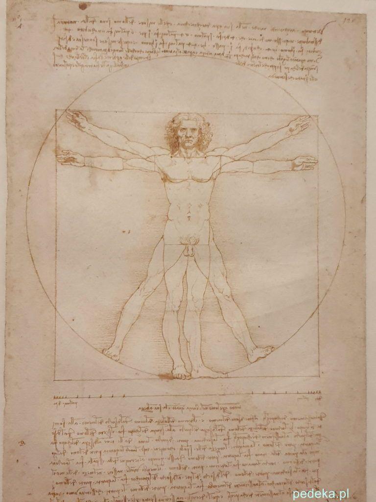 Leonardo da Vinci wystawa w Paryżu. Człowiek Witruwiański