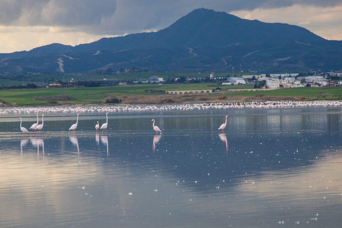 Jeszcze raz flamingi. Tam z tyłu jest ich cała masa
