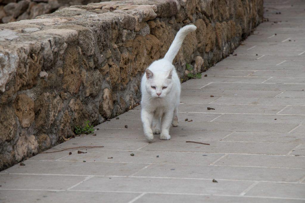 Pafos. Wszędzie było dużo kotów