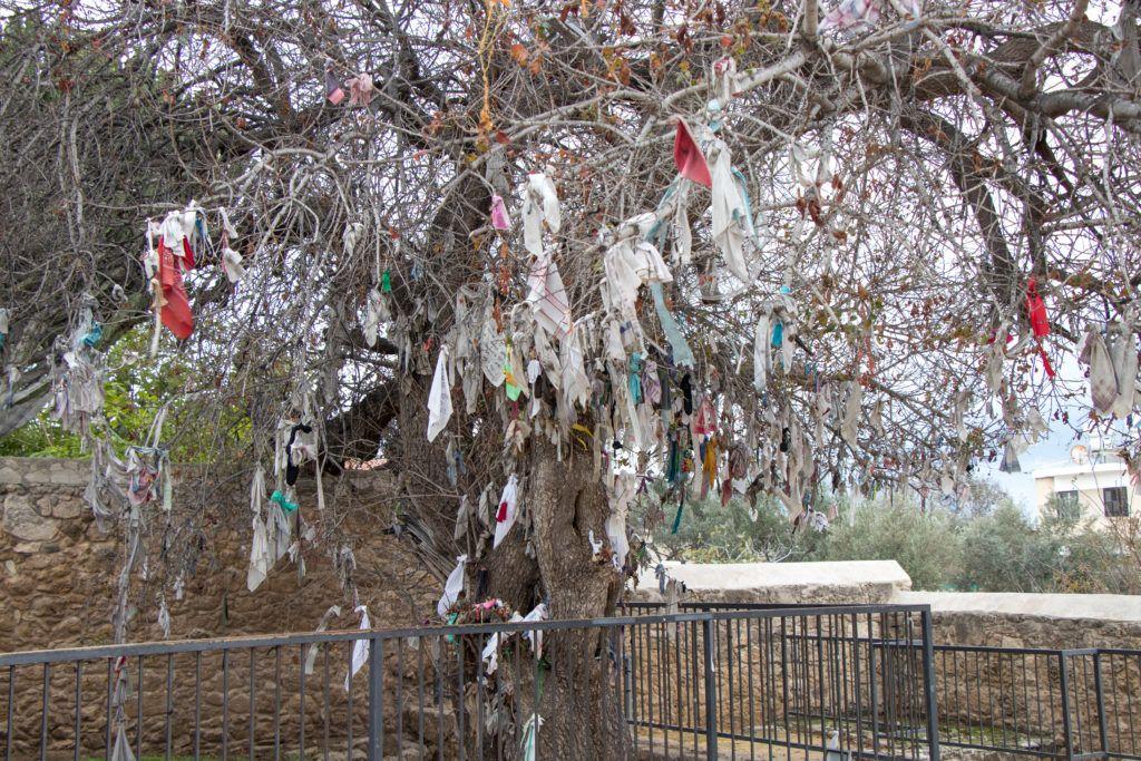 Drzewo przed katakumbami