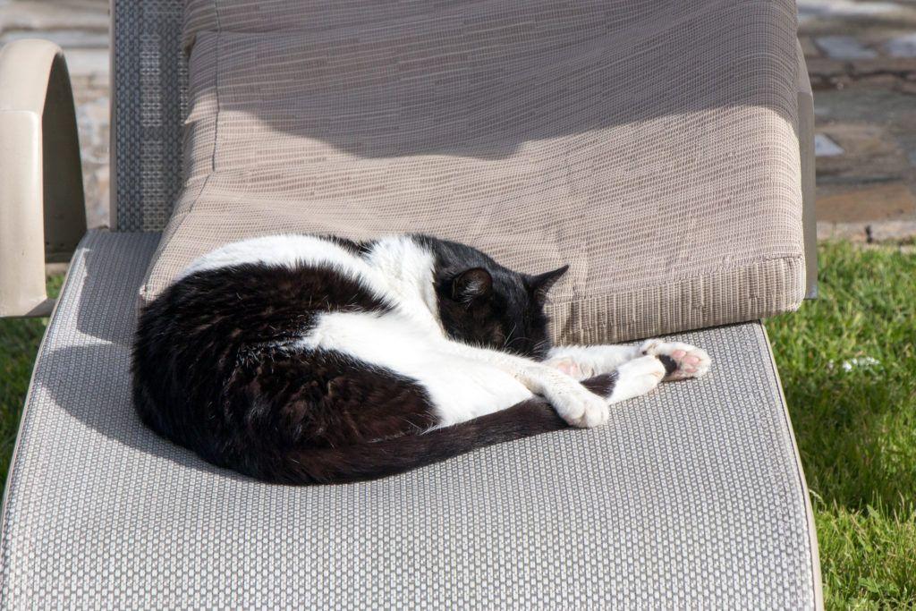 Kot na leżaku