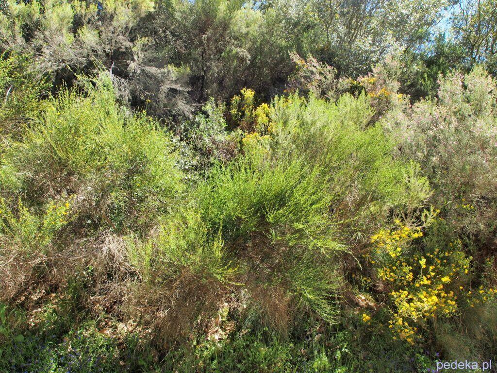 Piękna przyroda. Las Medulas