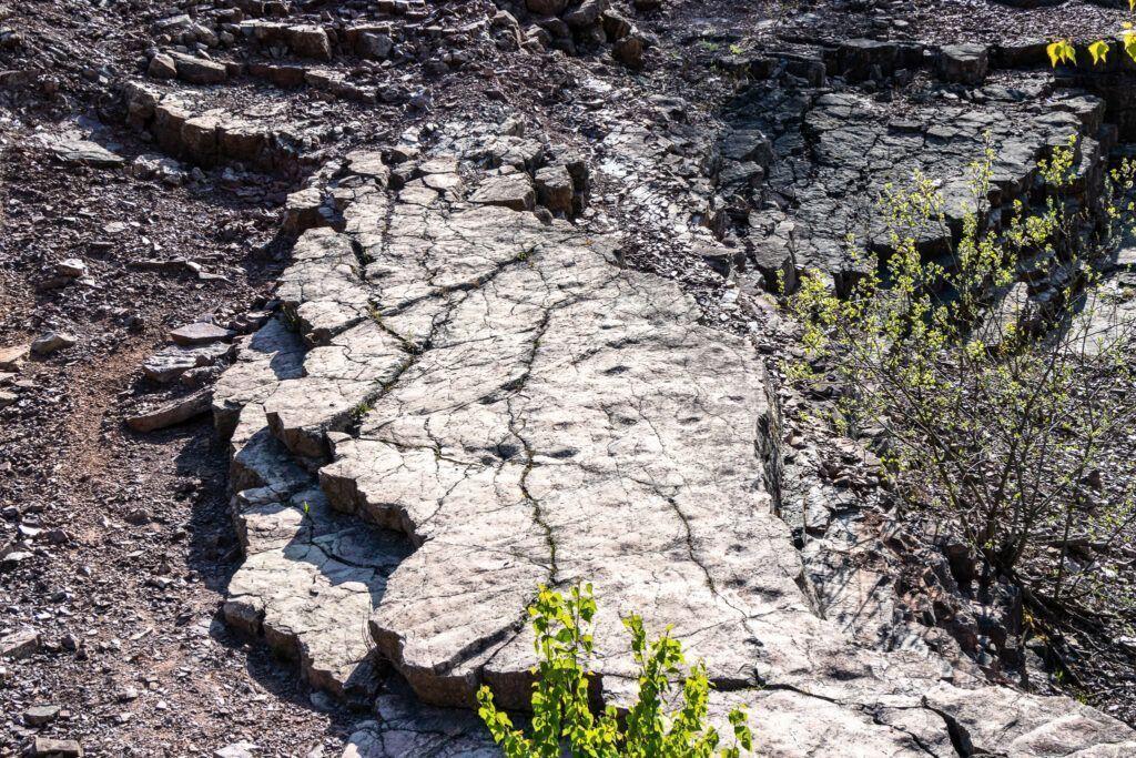 Okolice Kielc. Rezerwat Zachełmie. Ślady tetrapoda na skale