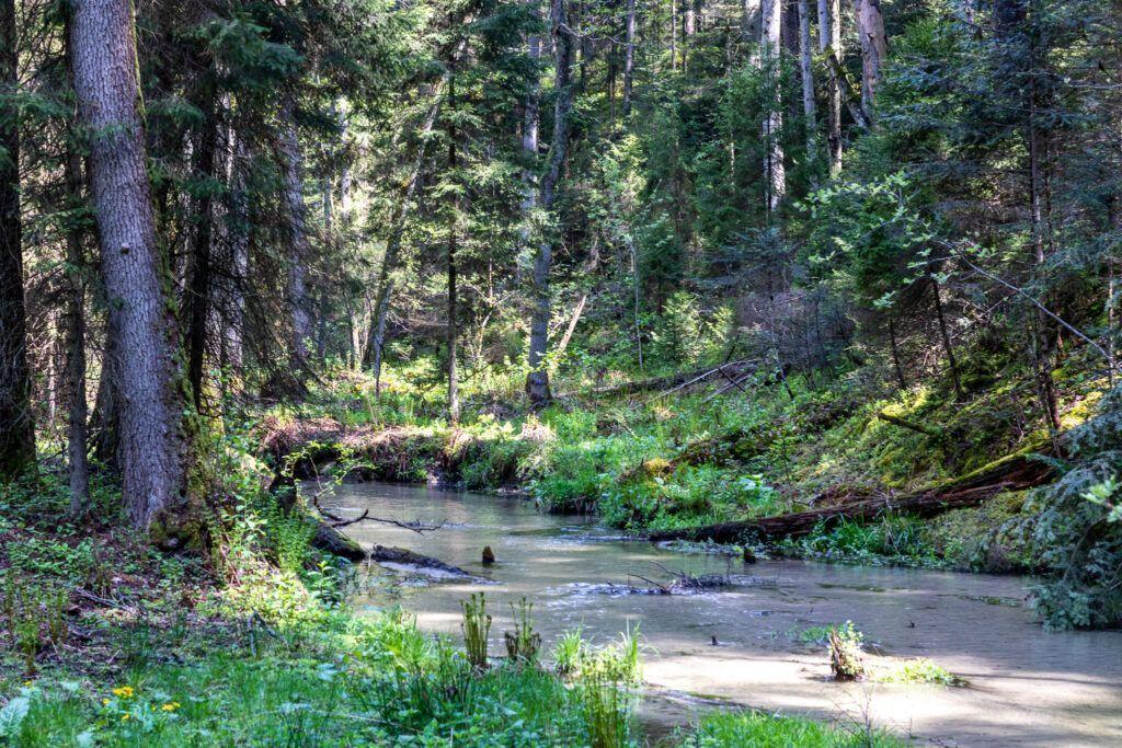 Rzeka Jeleń