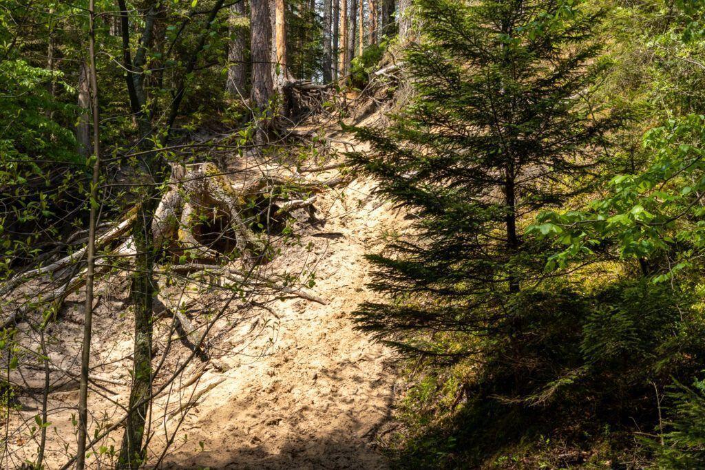 Stromy fragment szlaku