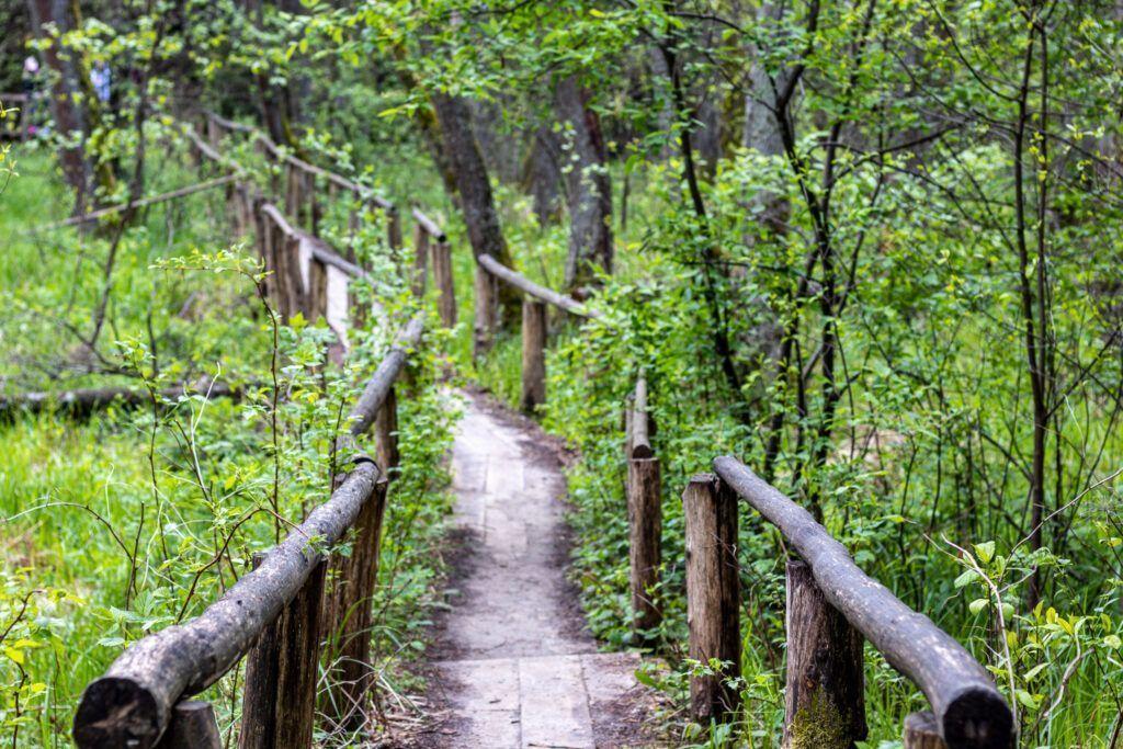 Szumy nad Tanwią, drewniane mostki