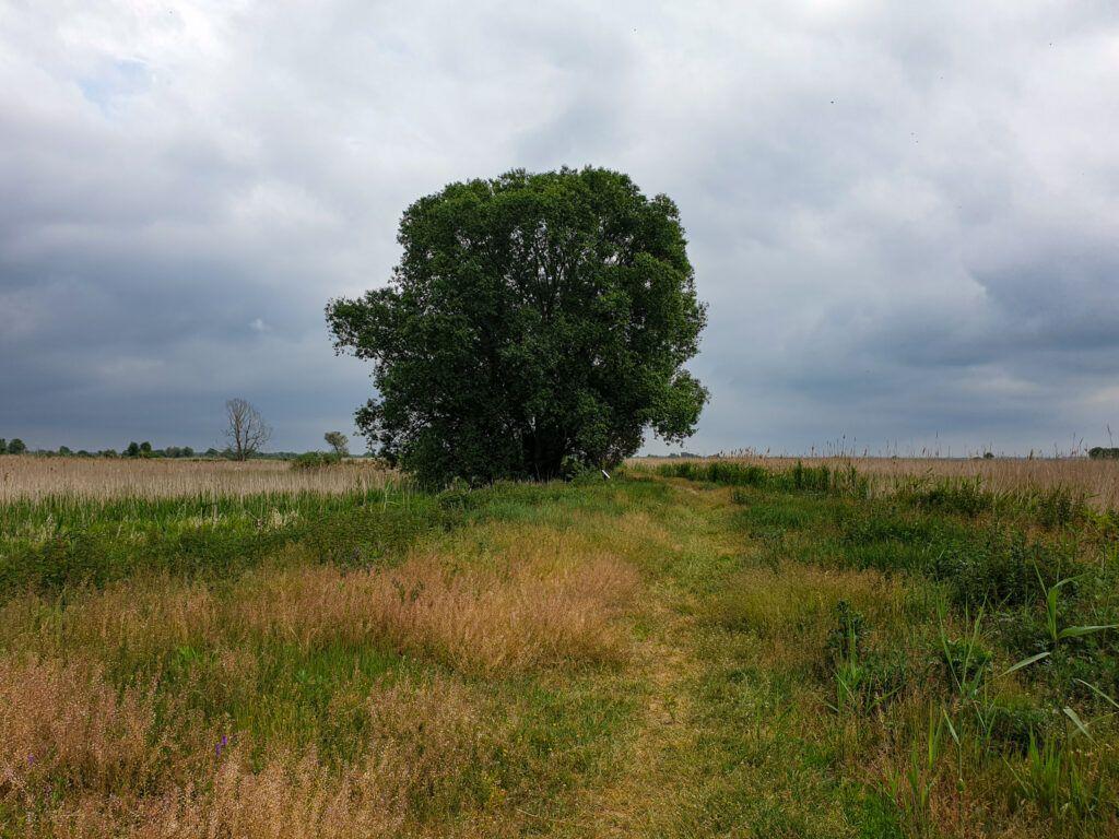 """Park Narodowy """"Ujście Warty. Samotne drzewo"""