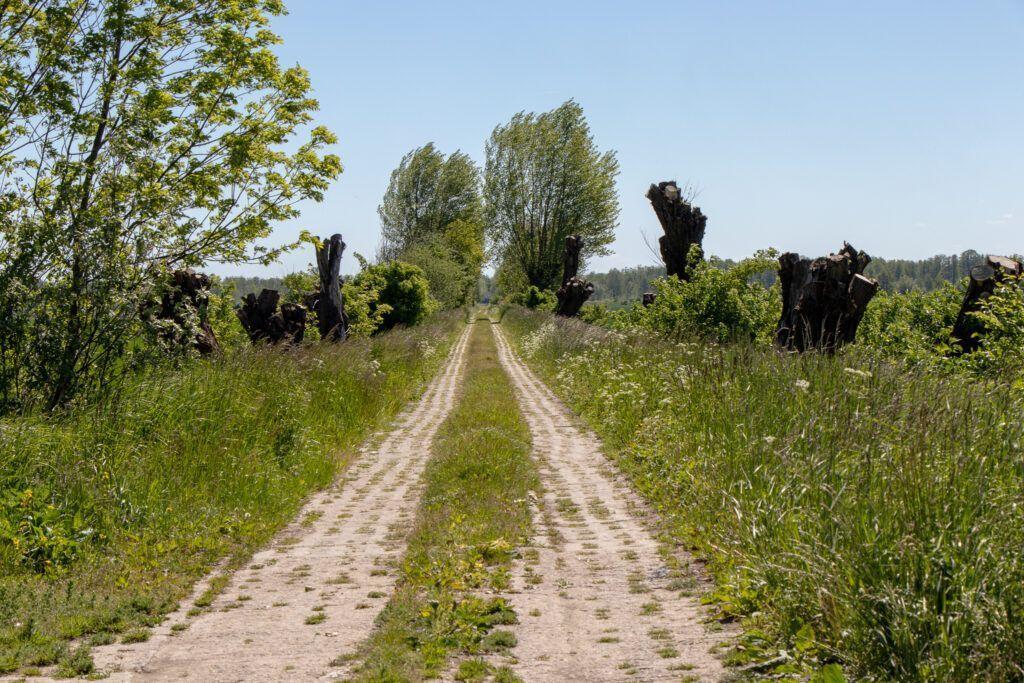 Okolice Elbląga. Polna droga