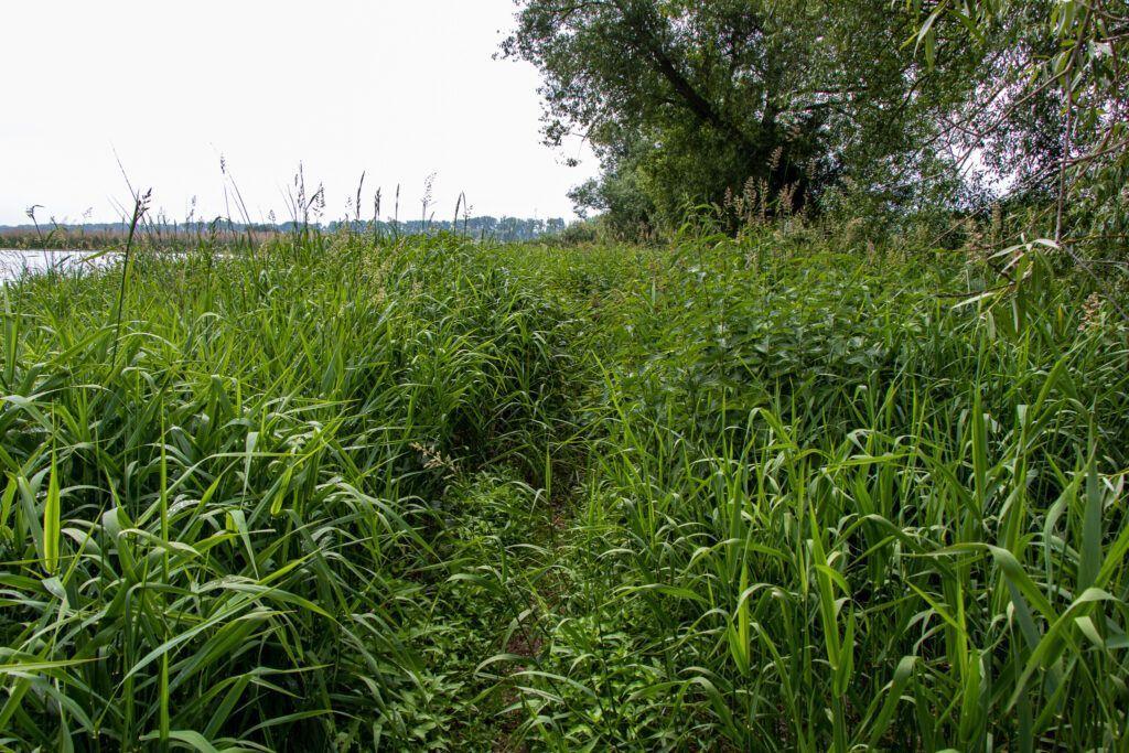 """Park Narodowy """"Ujście Warty. Ścieżka wśród traw"""