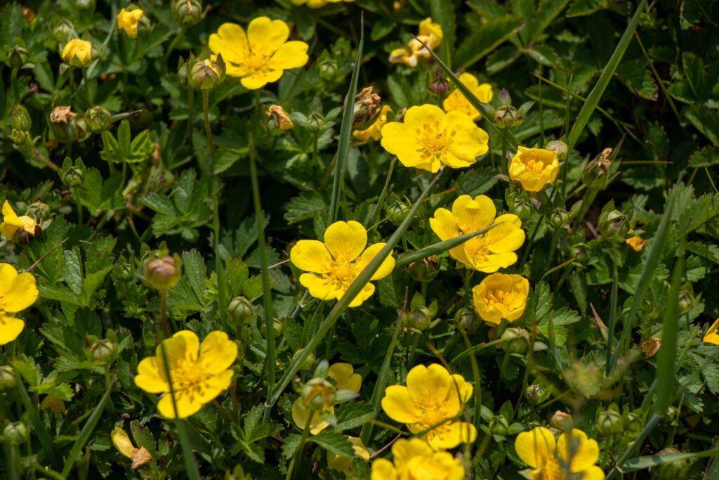 """Park Narodowy """"Ujście Warty.  I te żółte kwiatki z bliska"""