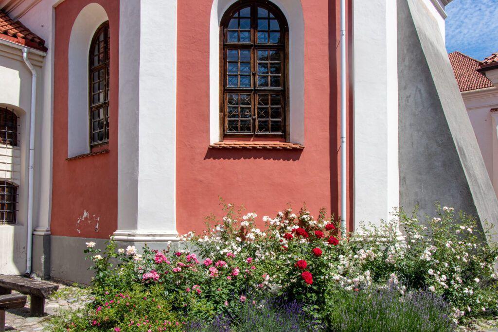 Wileńskie kościoły. Róże przy kościele bernardynów