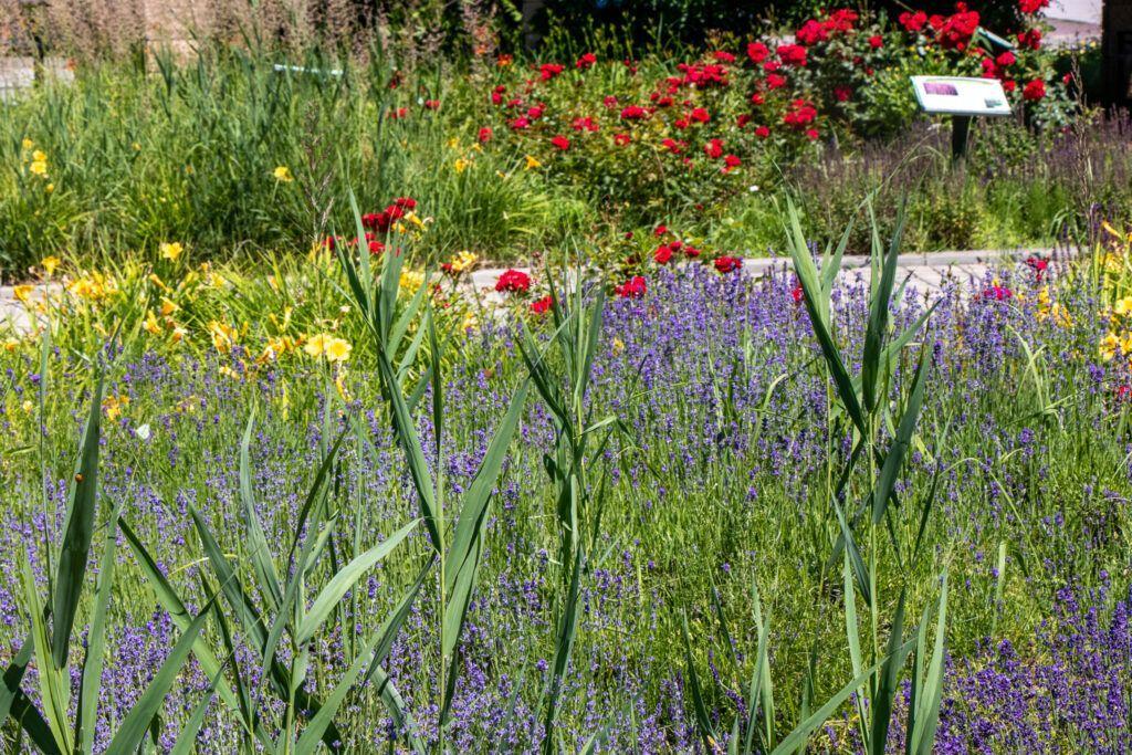 W ogrodzie kwiatowym