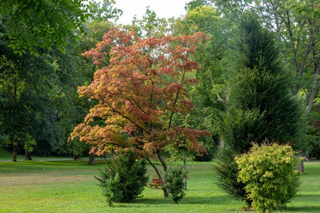 Baden-Baden. W parku