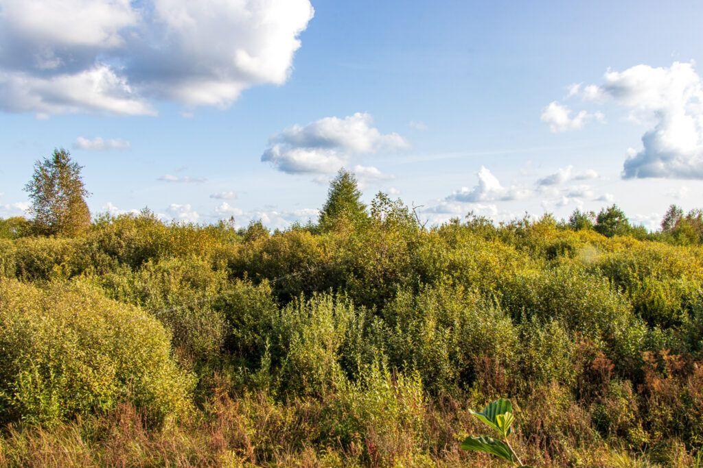Szlak Gugny-Barwik, wspaniałe chmury
