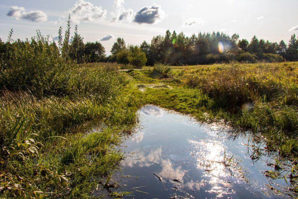 Szlak Gugny-Barwik. Wielka kałuża