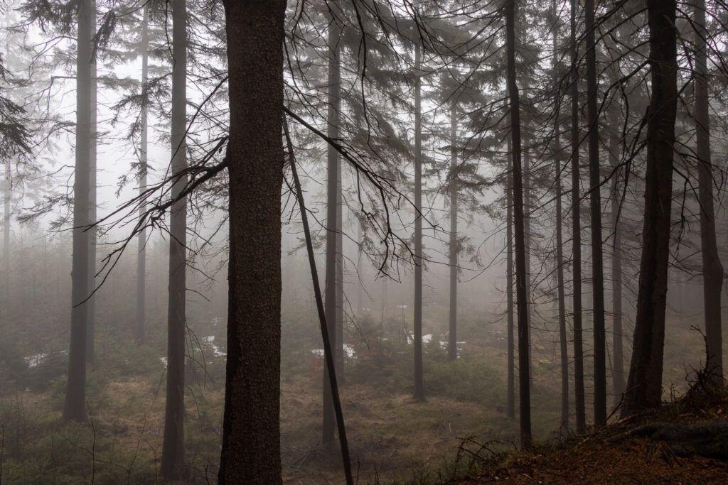 Rudawy Janowickie. Mgła na górze