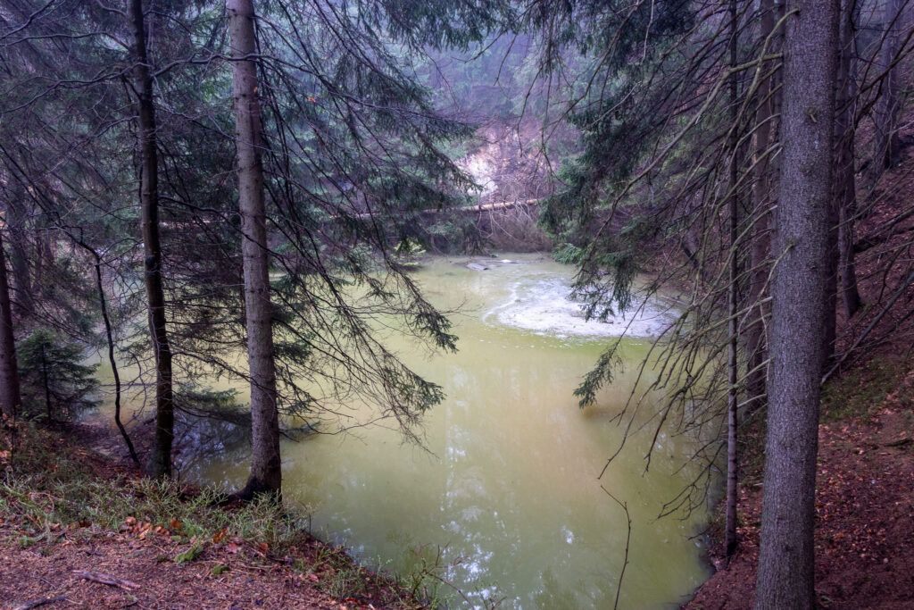 Zielony Stawek