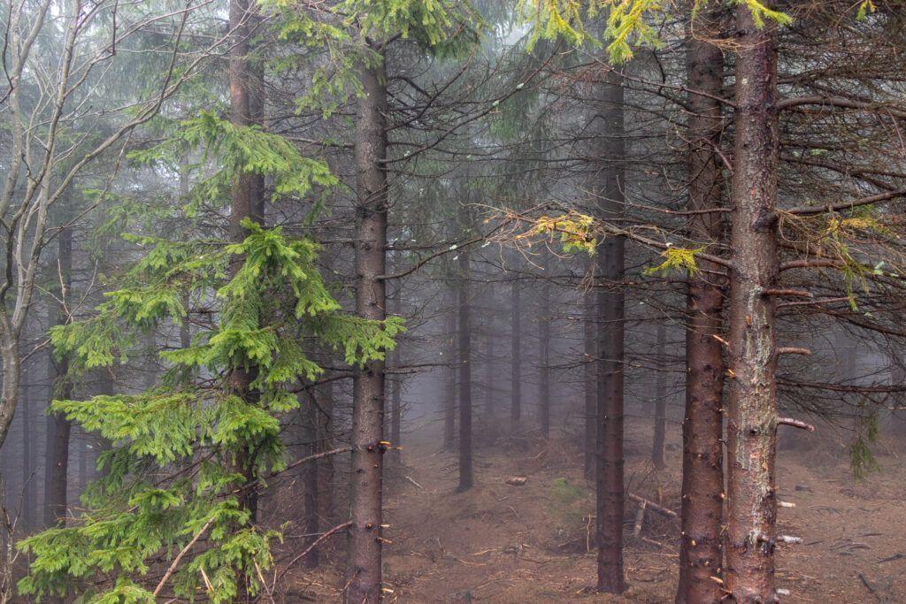 Mroczny Klimat na szczycie Wielkiej Kopy