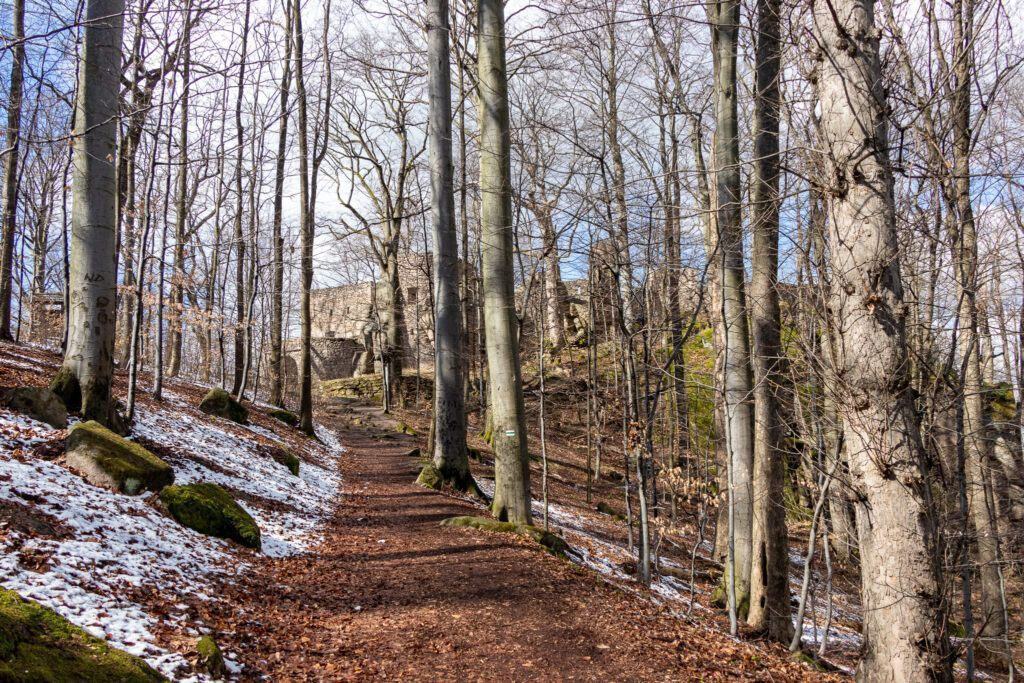 Droga do zamku Bolczów